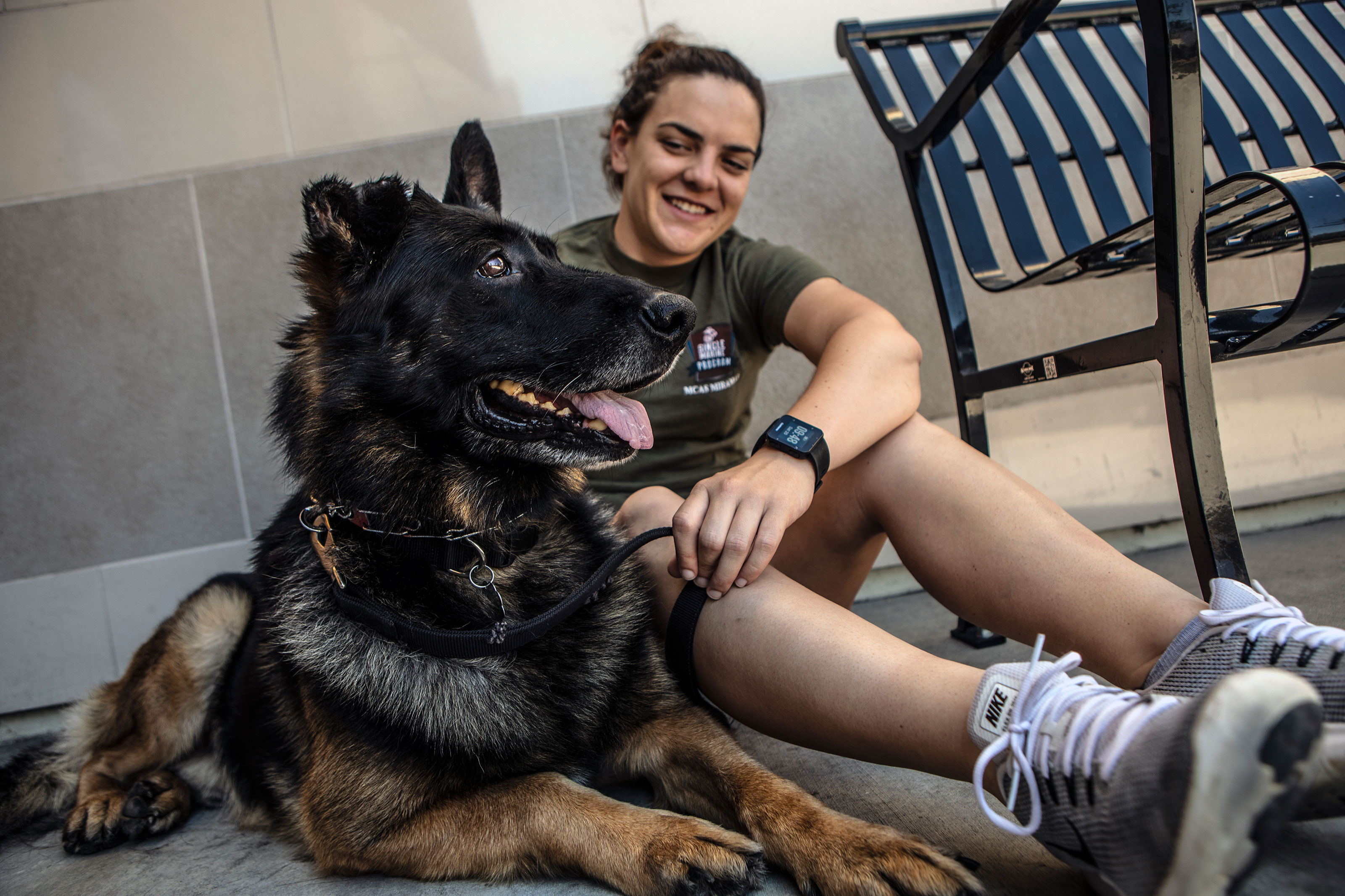 Here's How to Adopt a Military Working Dog