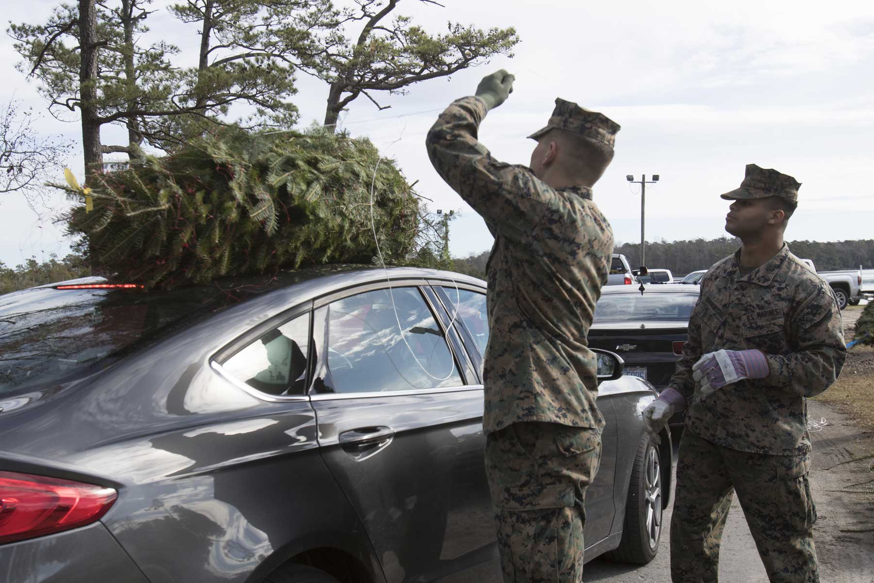 The Free Military Christmas Tree Program Is a Little Different