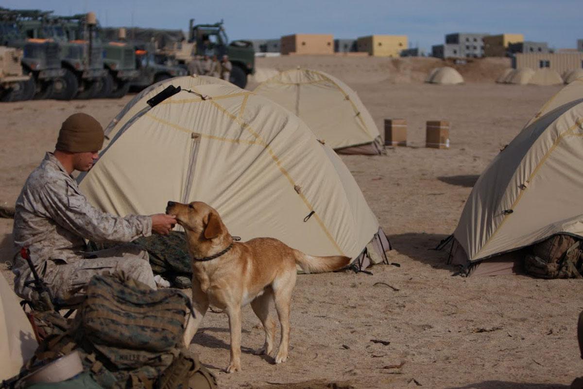 Marine Combat Tent & Marine Combat Tent | Military.com