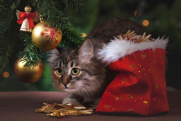 Unhappy cat under Christmas tree
