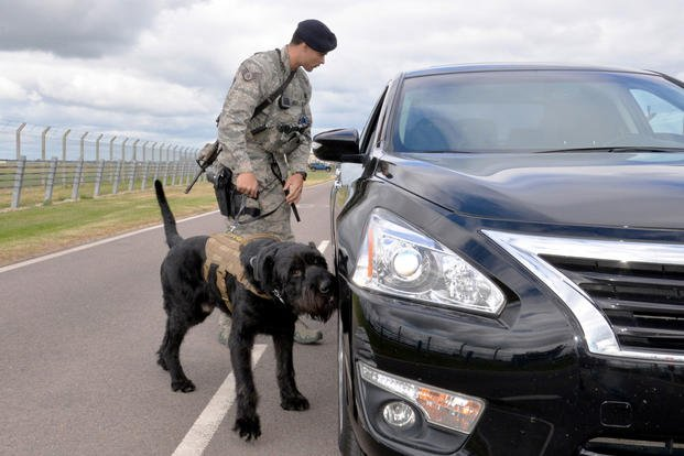 U.S. Air Force Staff Sgt. Alexandre Rogan, 100th Security Forces Squadron Military Working Dog trainer, and MWD Brock inspect a vehicle in response to a simulated security incident during an exercise at RAF Mildenhall, England, June 20, 2018. (U.S. Air Force photo by Tech. Sgt. David Dobrydney)