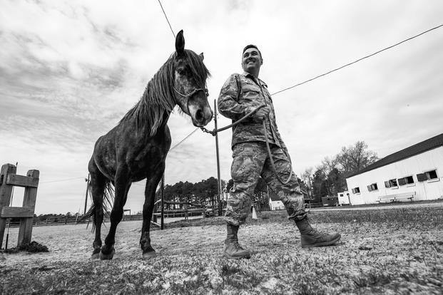 U.S. Air Force Staff Sgt. Cody Wisley, 83rd Network Operations Squadron boundary protection supervisor, guides his horse, Steel, at Joint Base Langley-Eustis, Virginia. Wisley visits Steel as often as he can because Steel helps relieve stress when Wisley hangs out and works with him. (U.S. Air Force/Areca T. Bell)