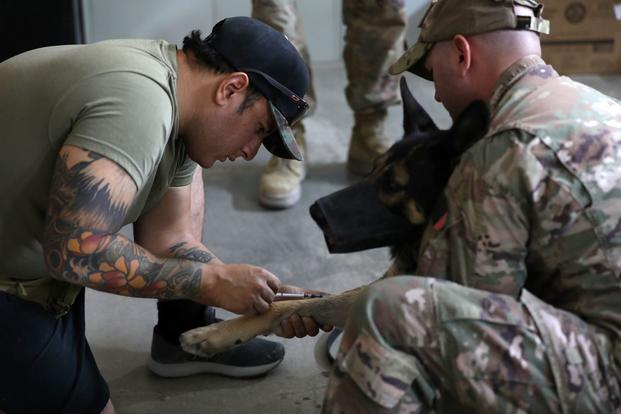 A military working dog handler draws blood  from Bubo, a patrol explosive detector dog.