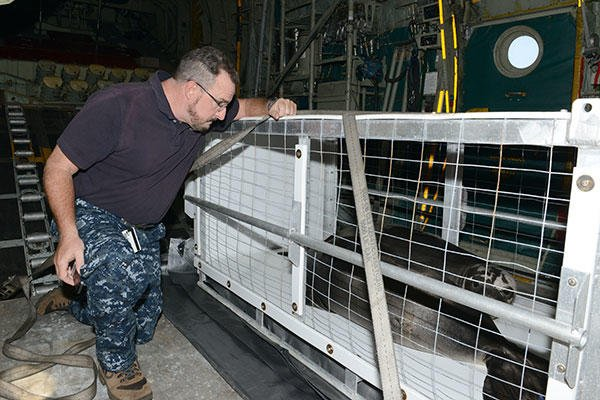David Schofield, NOAA Marine Mammal Health and Response Program Manager, checks on the status of two rehabilitated Hawaiian monk seals during a flight. (U.S. Coast Guard/PO2 Tara Molle)