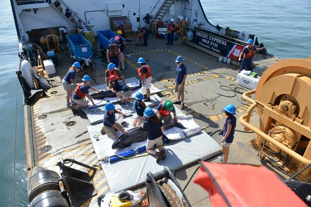 Personnel from the Institute of Marine Mammal Studies, NOAA, Navy Marine Mammal Program and U.S. Coast Guard prepare to release two pygmy killer whales in the Gulf Coast, July 11, 2016. (Photo: Petty Officer 3rd Class Lexie Preston)
