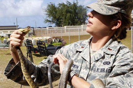 A U.S. military service member holds a Brown Tree Snake kept in captivity on Andersen Air Force Base on the island of Guam.