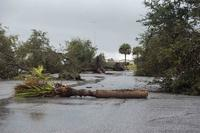 Trees are fallen at Naval Submarine Base Kings Bay as the result of a tornado that touched down on Sunday evening. (U.S. Navy/Mass Communication Specialist Seaman Aaron Xavier Saldana)